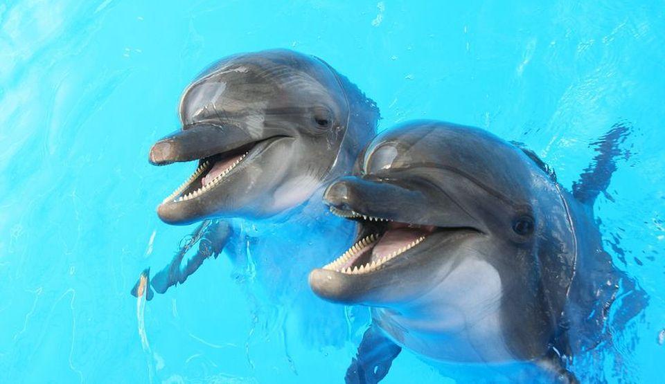 Initiere Dolphin Reiki oferita de maestrul Gabriela Bogdan