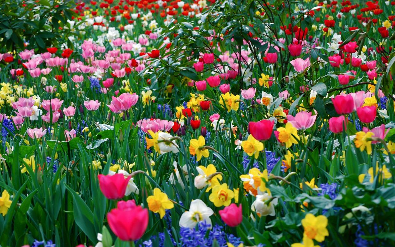 Echilibrarea chakrelor cu ajutorul florilor