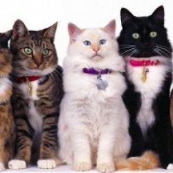 Superputerile pisicilor